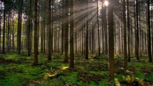 Palets de madera, nuevos y reciclados, a partir de maderas procedentes de bosques sostenibles